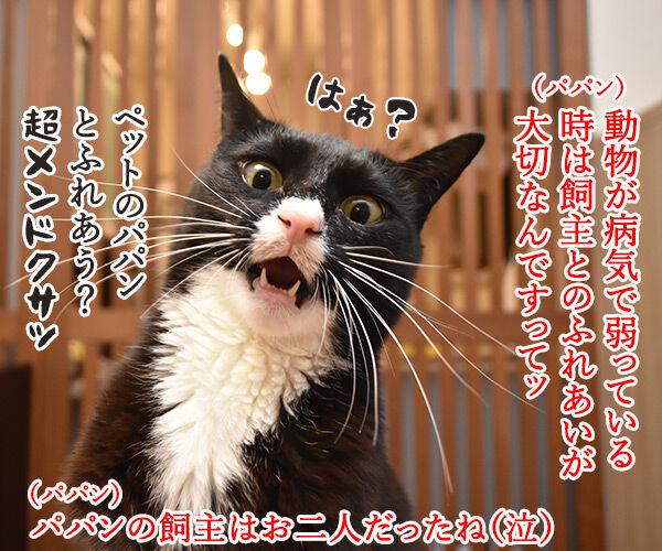動物が弱っている時はたくさん愛情を注入してあげるといいのよッ 猫の写真で4コマ漫画 1コマ目ッ