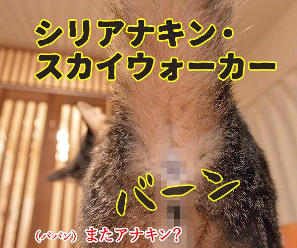 スター・ウォーズでダジャレ4連発ッ!! 猫の写真で4コマ漫画 3コマ目ッ