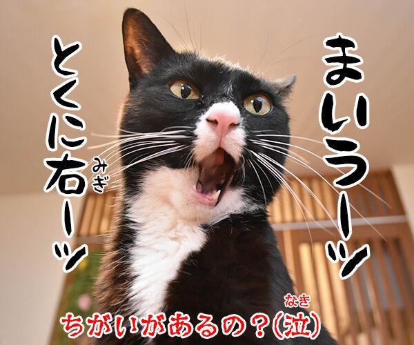 ちがいのわかるオンナ 猫の写真で4コマ漫画 4コマ目ッ