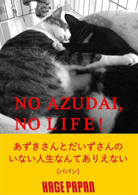 NO MUSIC, NO LIFE 猫の写真で4コマ漫画 2コマ目ッ