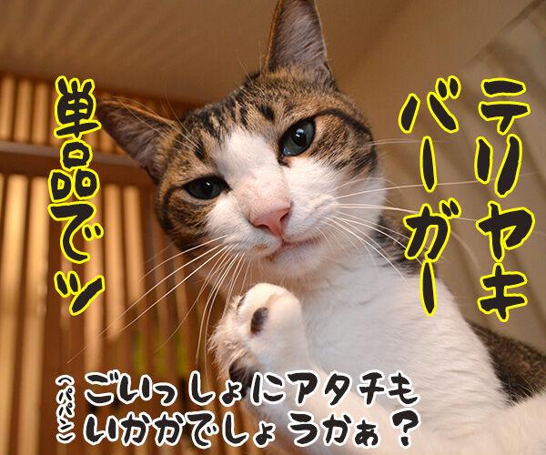 ハンバーガーショップ 猫の写真で4コマ漫画 4コマ目ッ