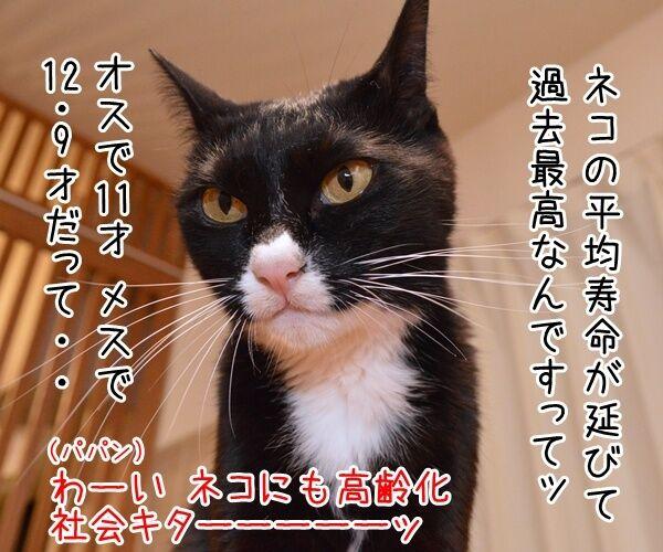 ネコの平均寿命が延びてるんですってッ 猫の写真で4コマ漫画 1コマ目ッ