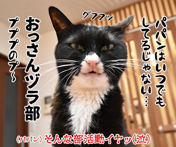 流行語大賞 ノミネート語 『おっさんずラブ』 猫の写真で4コマ漫画 4コマ目ッ