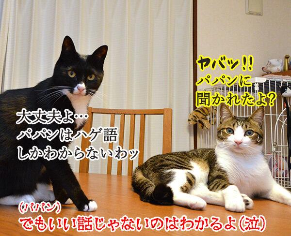 ニャニャニャ 猫の写真で4コマ漫画 4コマ目ッ