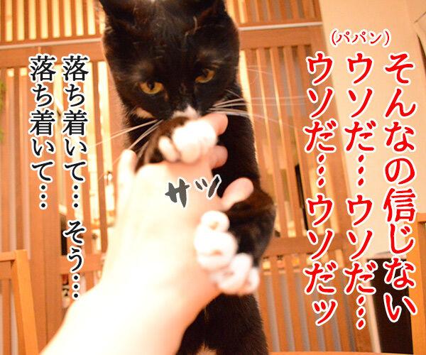 ウソだッ!!ウソだぁッ!! 猫の写真で4コマ漫画 2コマ目ッ