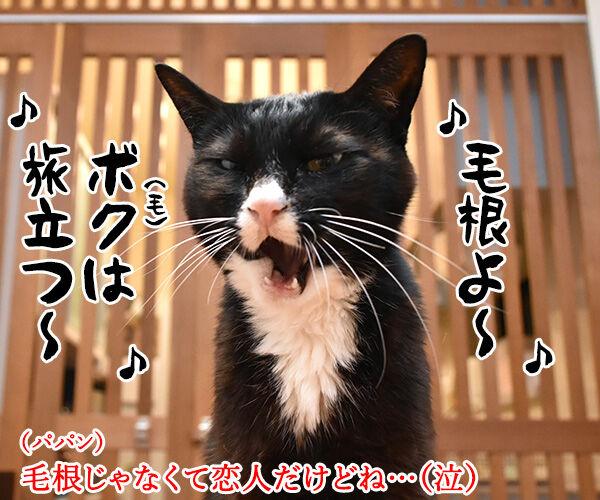 筒美京平さんのご冥福をお祈り申し上げます 猫の写真で4コマ漫画 3コマ目ッ