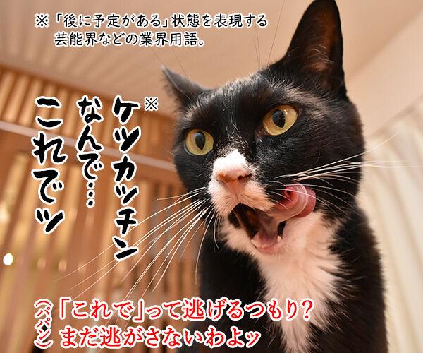 パパンにお説教されてるけど… 猫の写真で4コマ漫画 2コマ目ッ