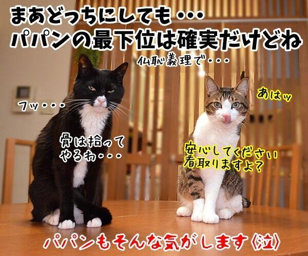 世界最長寿の猫Scooterさんが永眠 30歳でした 猫の写真で4コマ漫画 4コマ目ッ