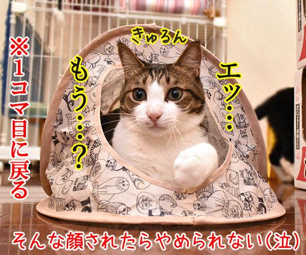 そんな顔しないで… 猫の写真で4コマ漫画 4コマ目ッ