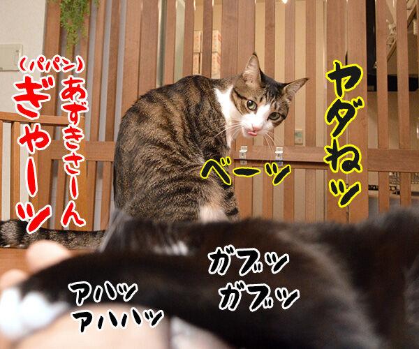 ガブリエル 其の一 猫の写真で4コマ漫画 4コマ目ッ