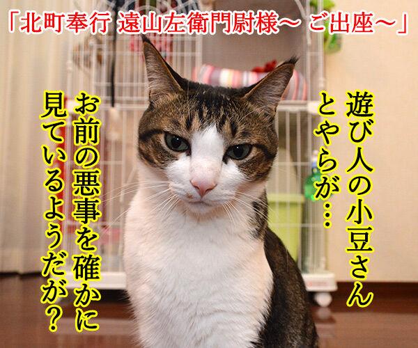 遠山のあずきさん 其の一 猫の写真で4コマ漫画 1コマ目ッ