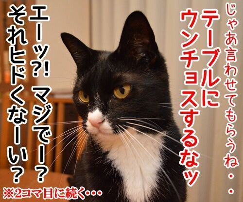 認めないオンナ 猫の写真で4コマ漫画 4コマ目ッ