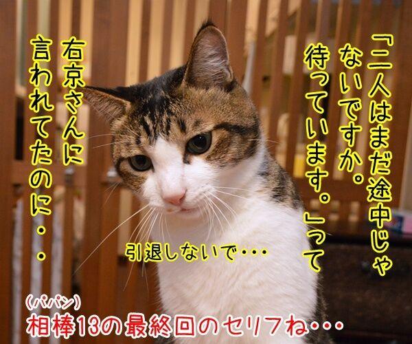 成宮くんが芸能界引退するんですってッ 猫の写真で4コマ漫画 2コマ目ッ