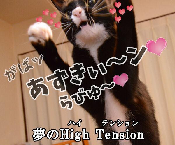 あなただけ見つめてる(大黒摩季) 猫の写真で4コマ漫画 4コマ目ッ