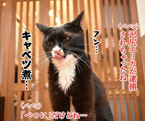 沢尻エリカがMDMA所持で逮捕されちゃったのよッ 猫の写真で4コマ漫画 1コマ目ッ