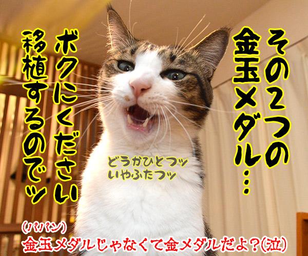 東京オリンピック ガンバレ!!ニッポン!! 猫の写真で4コマ漫画 4コマ目ッ