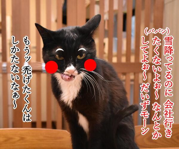 助けて!!だいずモン 其の二 猫の写真で4コマ漫画 3コマ目ッ