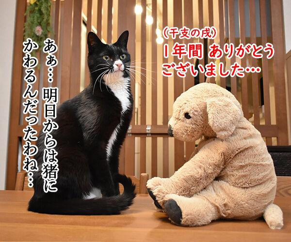 干支の戌も今日で終わりなのッ 猫の写真で4コマ漫画 1コマ目ッ