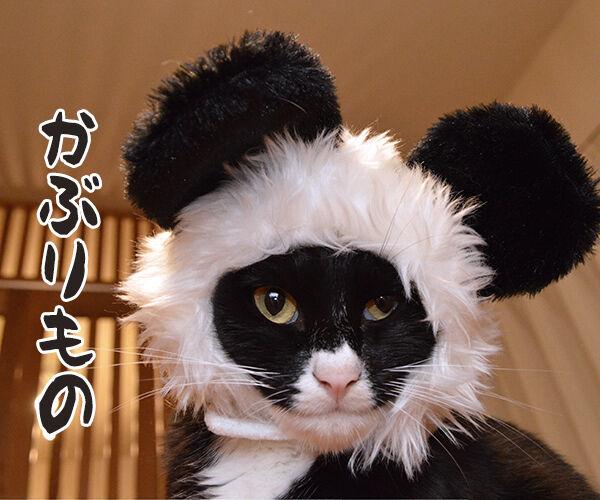 今までにした『かぶりもの』を集めてみたよッ 猫の写真で4コマ漫画 8コマ目ッ