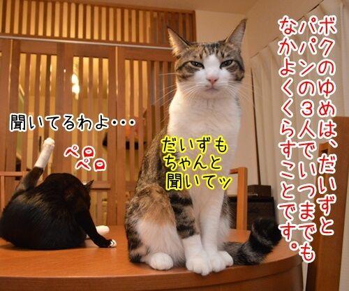 ボクのゆめ 猫の写真で4コマ漫画 2コマ目ッ