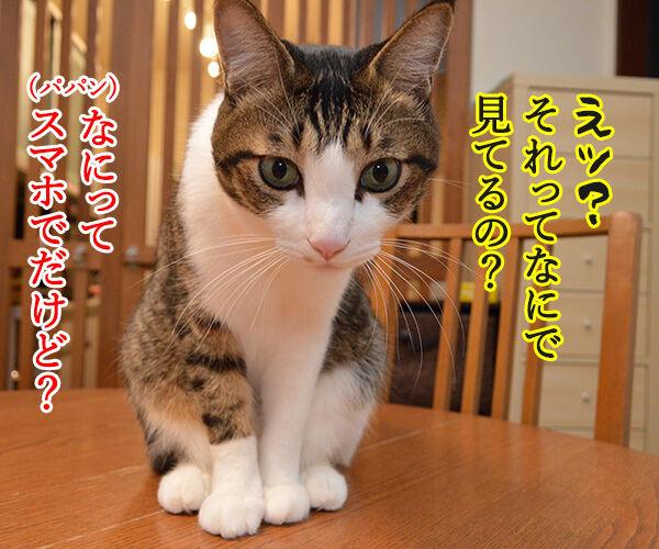 パパンは大掃除しないでYoutubeなのッ 猫の写真で4コマ漫画 2コマ目ッ