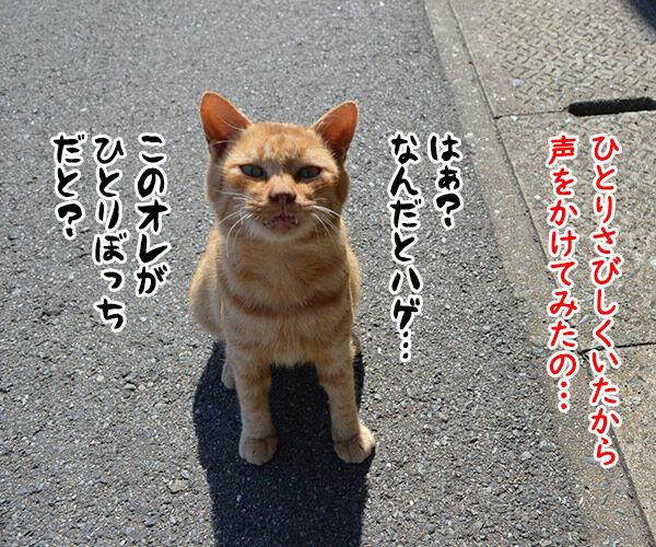 猫島 其の四 猫の写真で4コマ漫画 1コマ目ッ