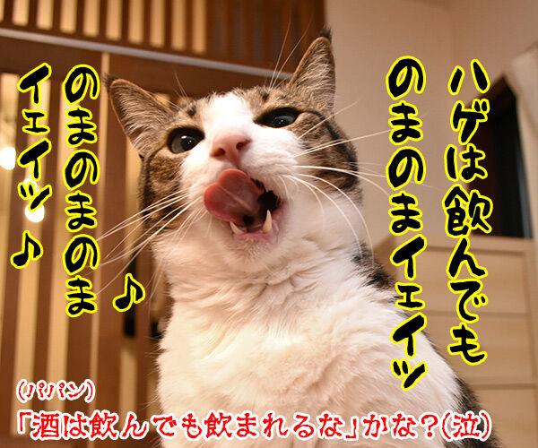 お酒のトラブルには気をつけなくちゃねッ 猫の写真で4コマ漫画 4コマ目ッ
