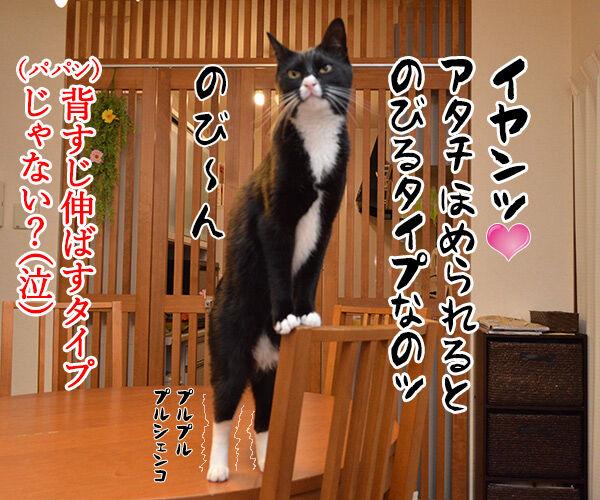 アタチ、ほめられるとのびるタイプなの 猫の写真で4コマ漫画 4コマ目ッ