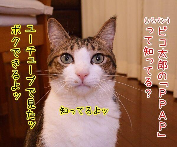 ペンパイナッポーアッポーペン(PPAP)って知ってる? 猫の写真で4コマ漫画 1コマ目ッ