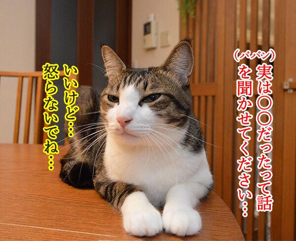 実は○○だった話 猫の写真で4コマ漫画 1コマ目ッ