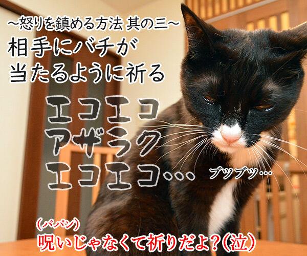 怒りを鎮める方法を試してみましょ 猫の写真で4コマ漫画 4コマ目ッ