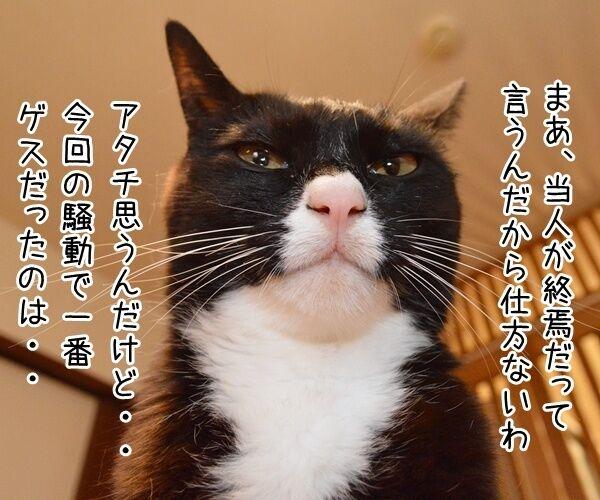 ベッキー騒動、これにて終焉? 猫の写真で4コマ漫画 3コマ目ッ