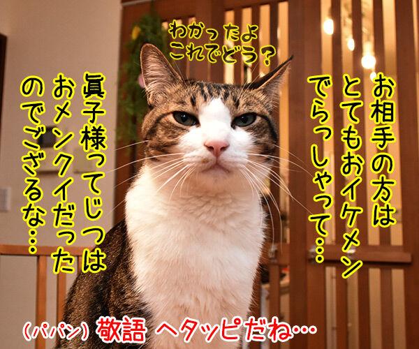 眞子さま ご婚約おめでとうございますッ 猫の写真で4コマ漫画 2コマ目ッ