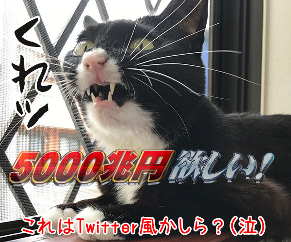 SNSの投稿 〇〇風な写真 猫の写真で4コマ漫画 4コマ目ッ
