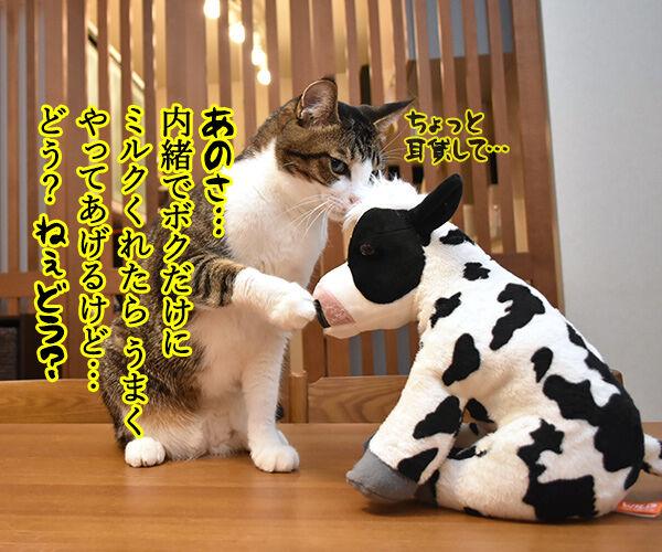 来年の干支の丑さんがご挨拶なのッ 猫の写真で4コマ漫画 2コマ目ッ