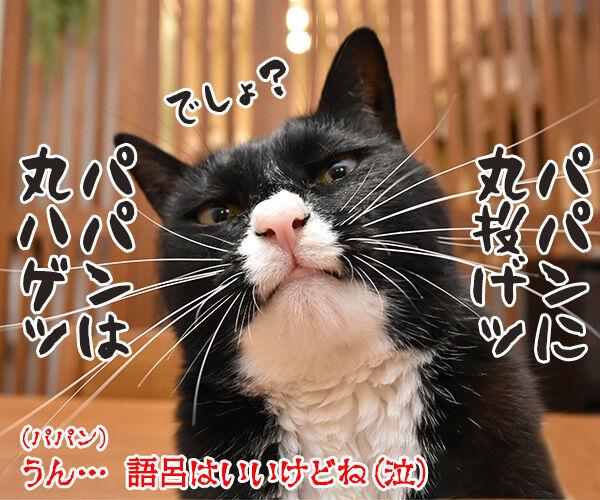 そのまんまパパンになんてイヤイヤーン 猫の写真で4コマ漫画 4コマ目ッ