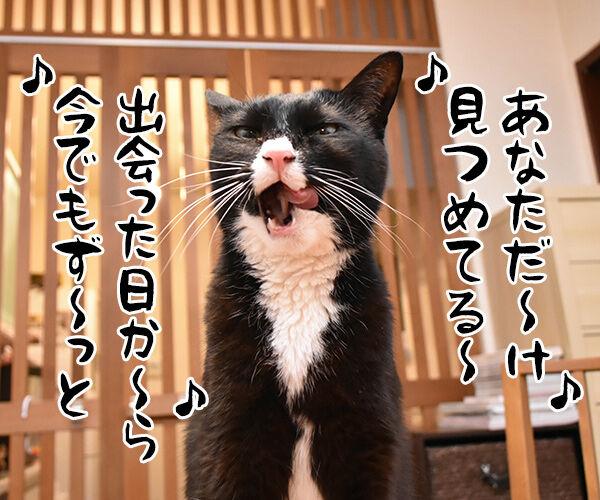 あなただけ見つめてる 猫の写真で4コマ漫画 1コマ目ッ