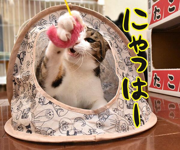 そんな顔しないで… 猫の写真で4コマ漫画 3コマ目ッ