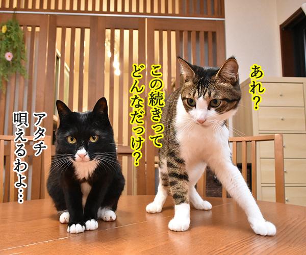 くちぶえふいてあきちへいったら 猫の写真で4コマ漫画 2コマ目ッ
