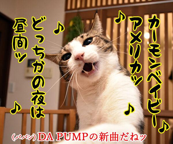 DA PUMPのU.S.Aはダサかっこいいのよッ 猫の写真で4コマ漫画 1コマ目ッ