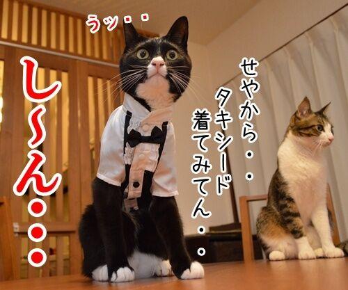やねんけど 猫の写真で4コマ漫画 3コマ目ッ