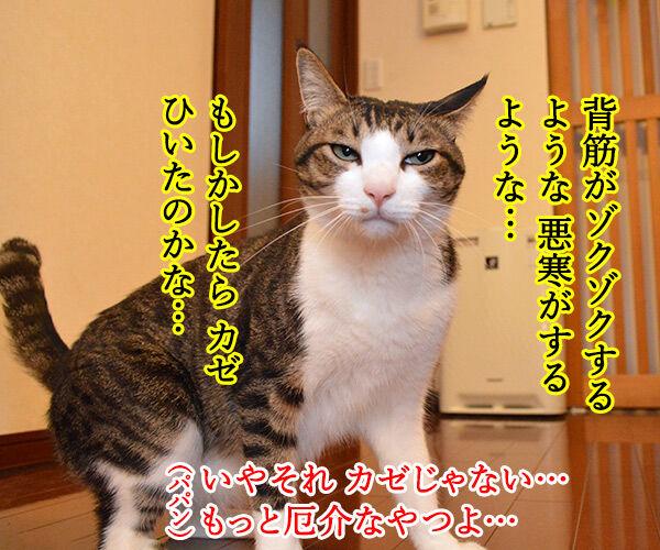 背筋がゾクゾクするのはカゼかしら? 猫の写真で4コマ漫画 2コマ目ッ