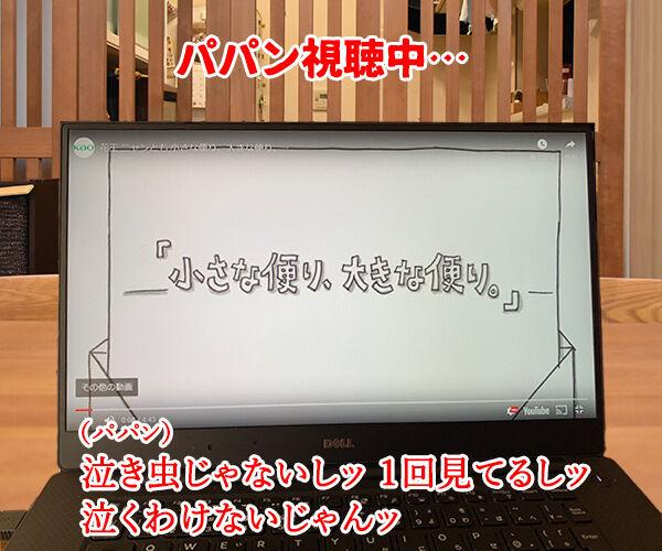 花王「ニャンとも清潔トイレ」のWEB動画が広告賞を受賞したんですってッ 猫の写真で4コマ漫画 3コマ目ッ