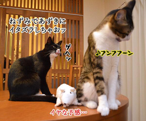 いたずらしちゃおッ 猫の写真で4コマ漫画 1コマ目ッ