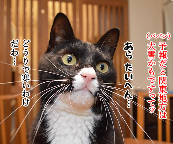 東京も大雪なんですってッ 猫の写真で4コマ漫画 1コマ目ッ