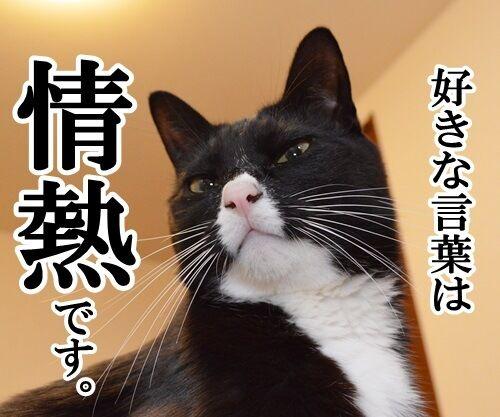 好きな言葉は情熱です。 猫の写真で4コマ漫画 1コマ目ッ