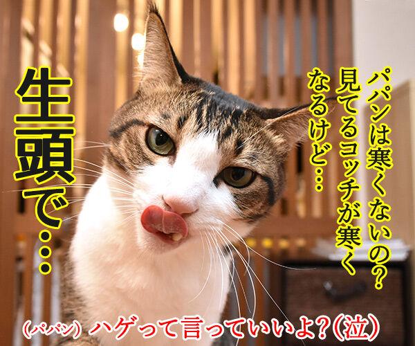 保険に入ろうと思って… 猫の写真で4コマ漫画 4コマ目ッ