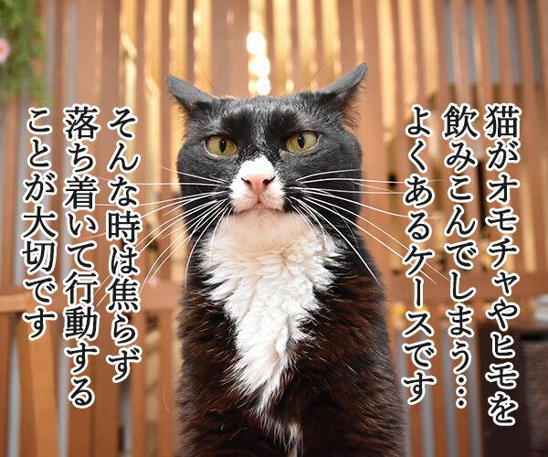 猫さんが誤飲してしまったら…? 猫の写真で4コマ漫画 1コマ目ッ