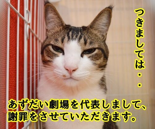 お世話になっております。 猫の写真で4コマ漫画 3コマ目ッ