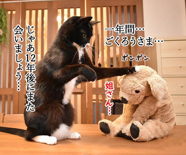 干支の戌も今日で終わりなのッ 猫の写真で4コマ漫画 2コマ目ッ